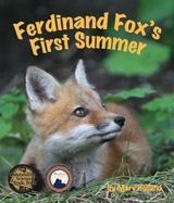 Follow this young red fox as he 